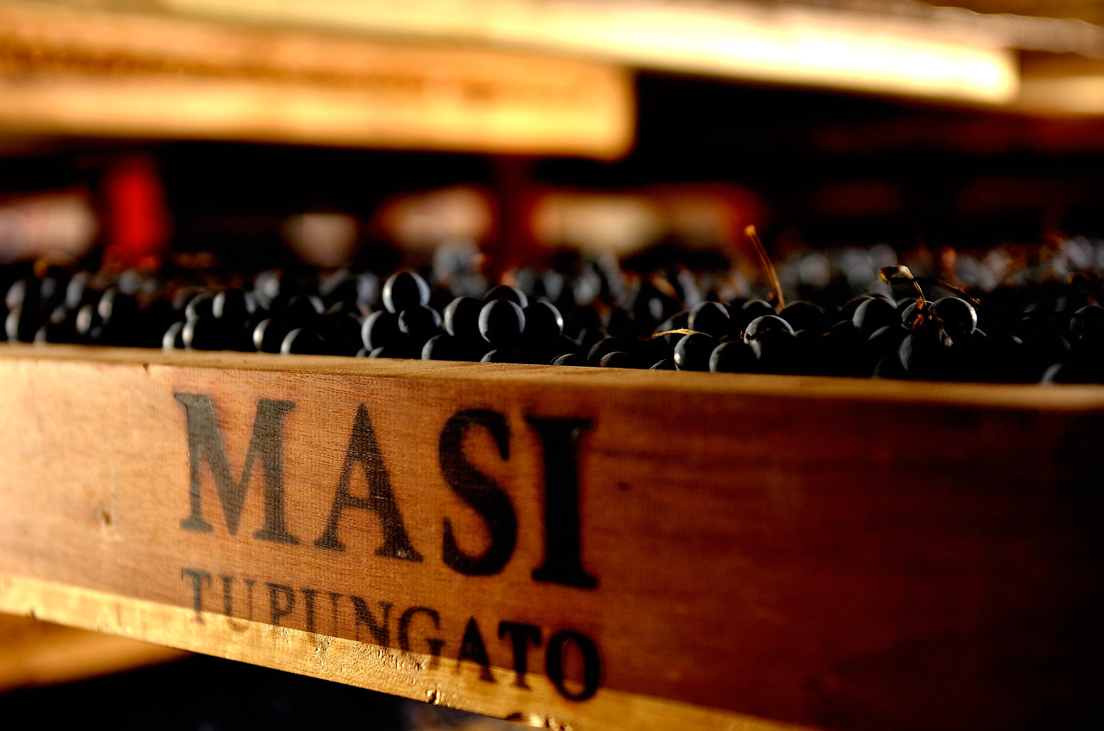 masi1